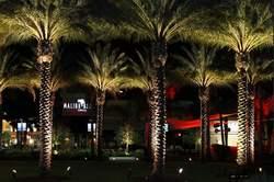 Port Orange Palm Trees at the Pavilion at Night