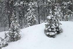 Snowy wood - Seeley Lake, MT
