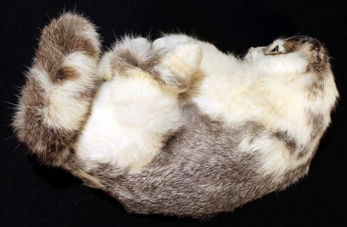 Lifelike Rabbit Fur Reclining Cat
